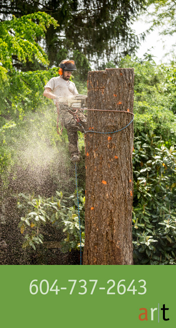 tree-pruning-1