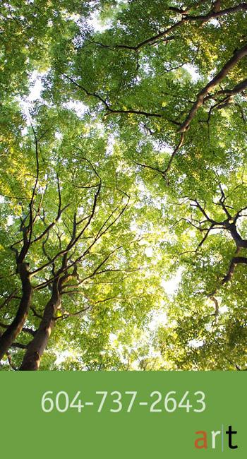 tree-pruning-9