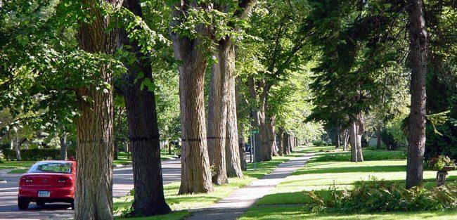 treework2